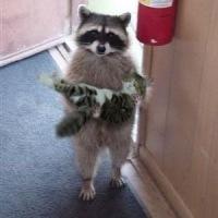 Civiltà è un gatto domestico