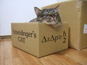 Schr Ef Bf Bddinger S Cat Explained Simply