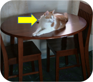 learning-spanish-for-beginners-ser-vs-estar-cat-on-table
