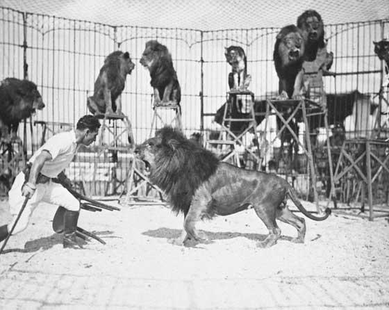 liontamer